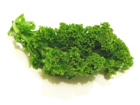a single curly kale leaf over white